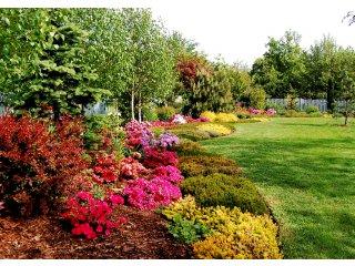 Zakładanie i projektowanie ogrodu