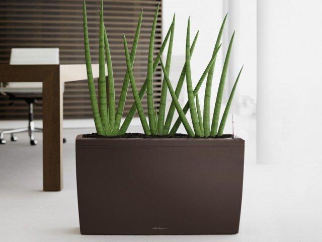 donice cararo. Black Bedroom Furniture Sets. Home Design Ideas